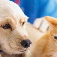 Veterinary Supplies